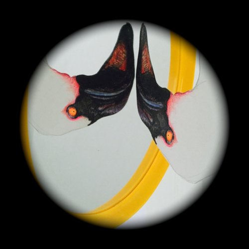 flamingo_sensor_vignette.s1300.p750.r2